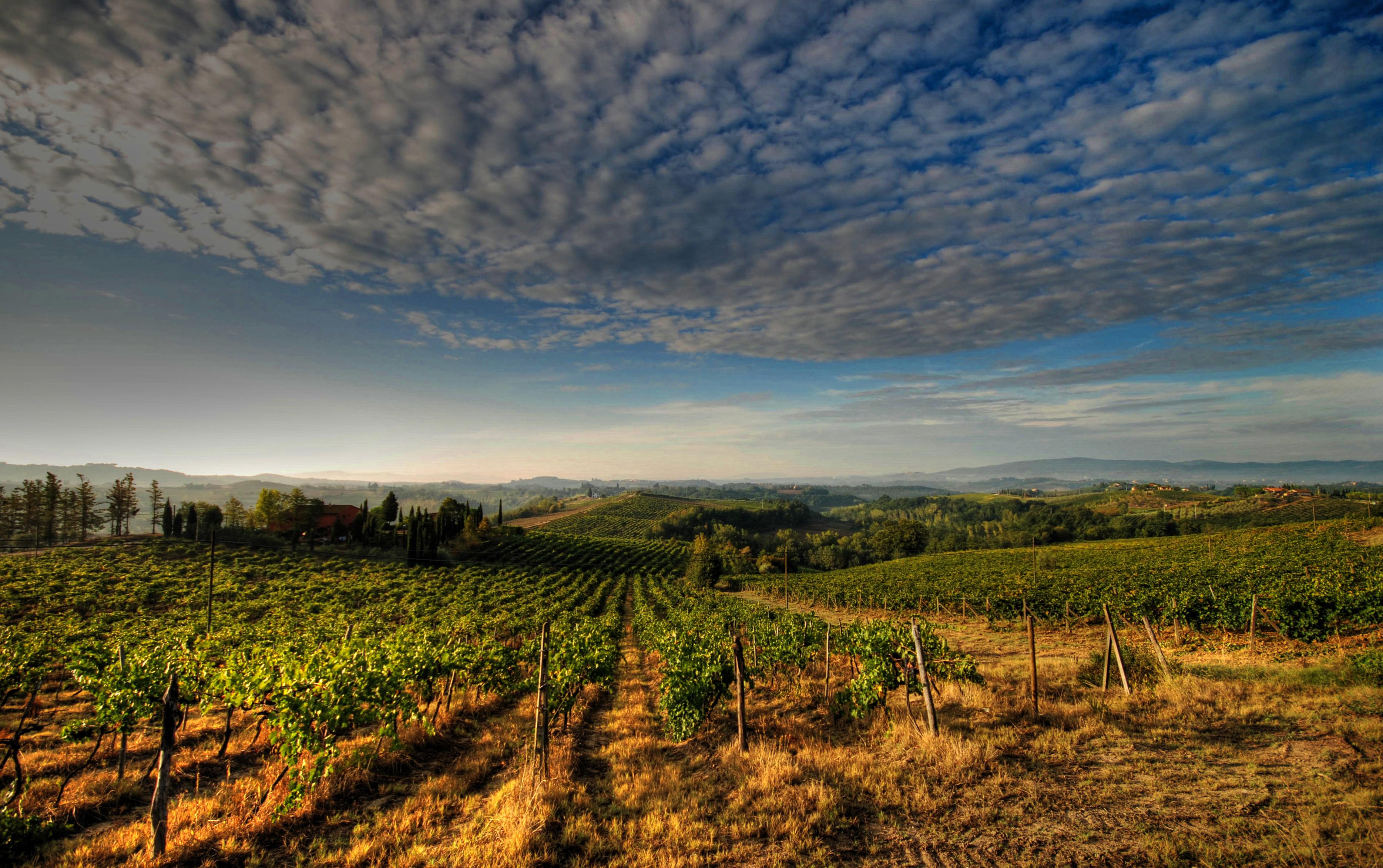 Agricoltura biologica e regolamentazione europea