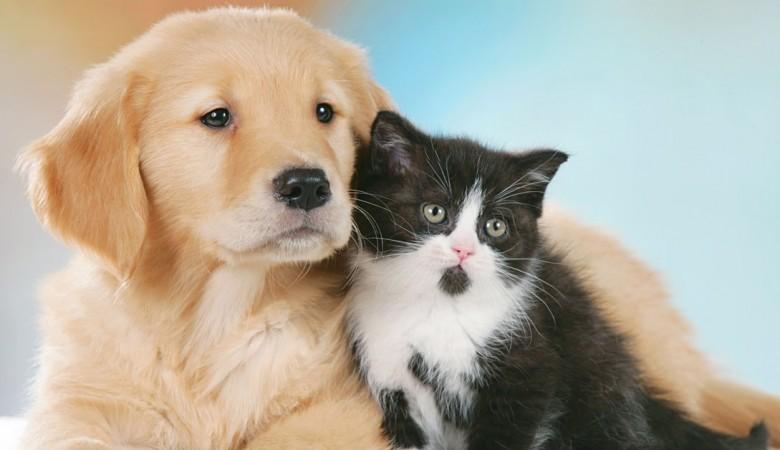 L'animale domestico e la separazione